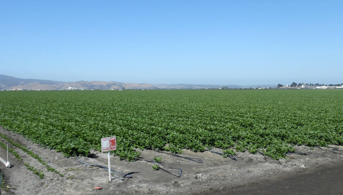 Company Won't Pay More Than $5,000 After Pesticide Exposure Sickens 17 Farmworkers
