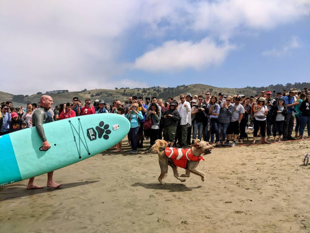 Teddy comes back to a cheering crowd after a good run on the waves.