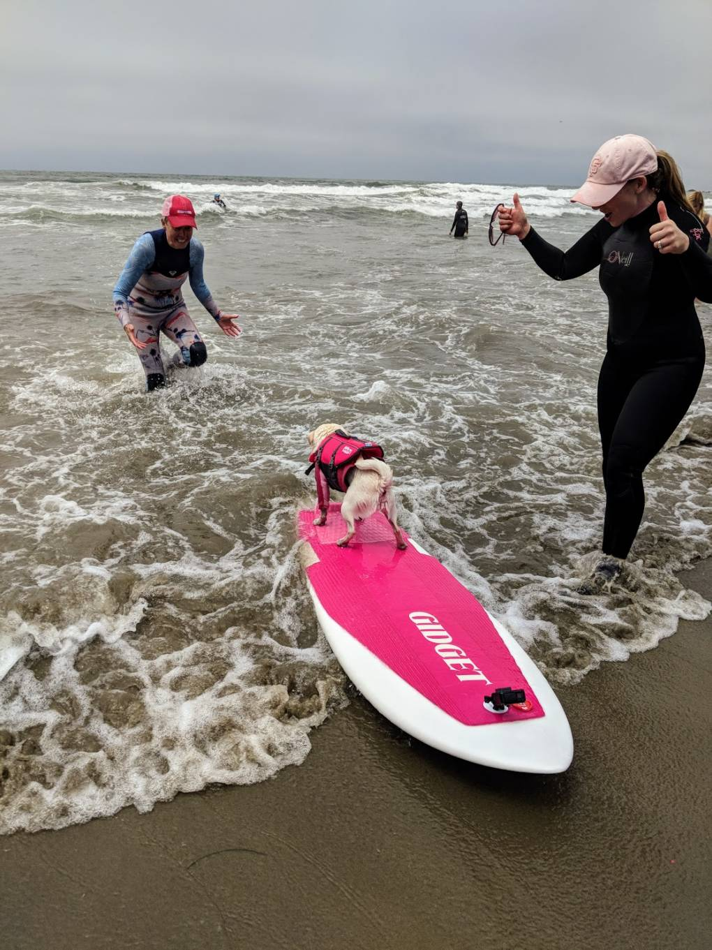 Gidget the pug gets the thumbs-up after a spectacular run in the final surf-off event.