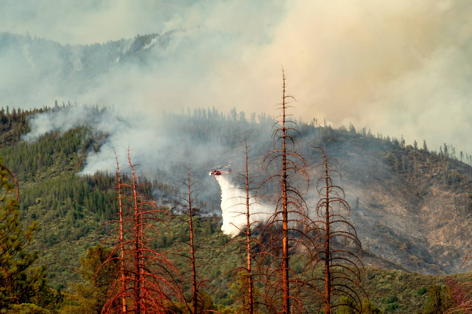 Dead trees line a clearing as a helicopter battling the Ferguson Fire passes behind in the Stanislaus National Forest. NOAH BERGER / AFP