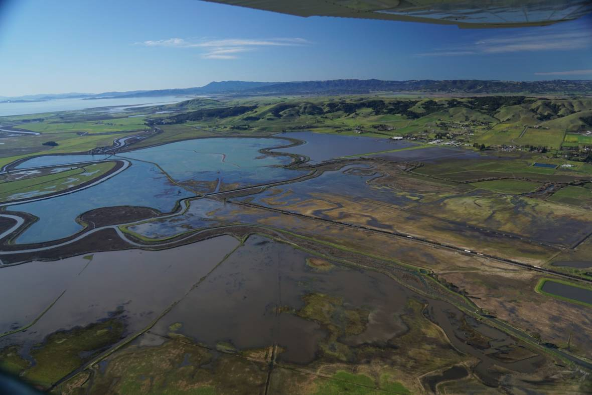 Land Managers Have Big Ideas for Sonoma Creek Baylands