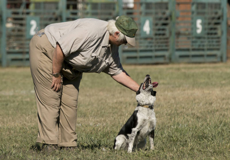 "Karen Kollgaard pets Timbre at the end of her run. ""This is one of the worst trials we've done in a long time,"" said Kollgaard, who has been doing sheepdog trials for nearly 40 years. ""She's hard to manage because she's fast."""