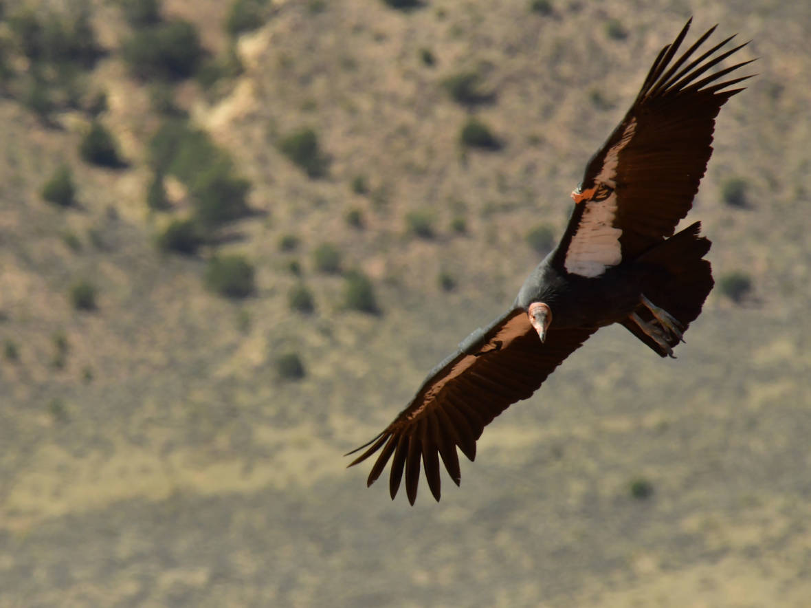 The Flight of the Condors, and Their Audience