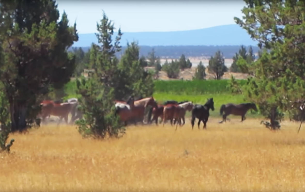 Lawsuit Aims to Protect Modoc County's Wild Horses From Slaughter