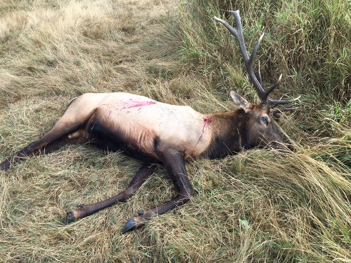 State Game Wardens Trying to Track Down Humboldt County Elk Poachers