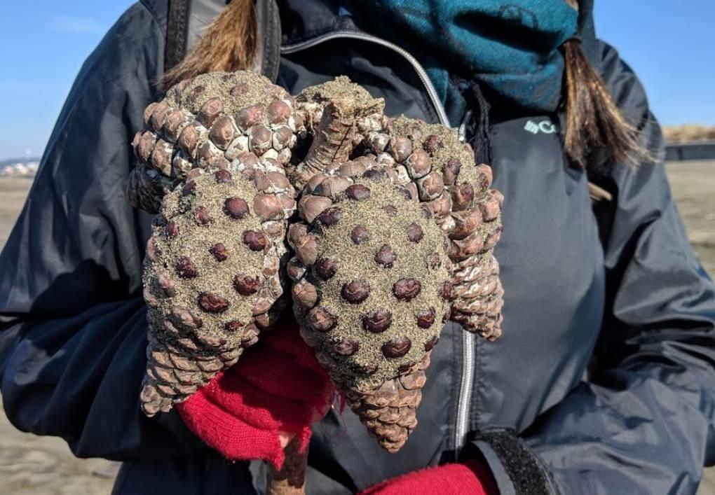 Citizen Scientists Scour Ocean Beach in 'Bioblitz'