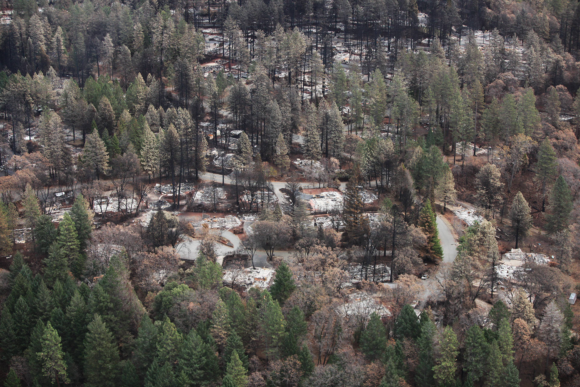 A residential neighborhood in Paradise, one month after the Camp Fire ripped through town. Adam Grossberg/KQED