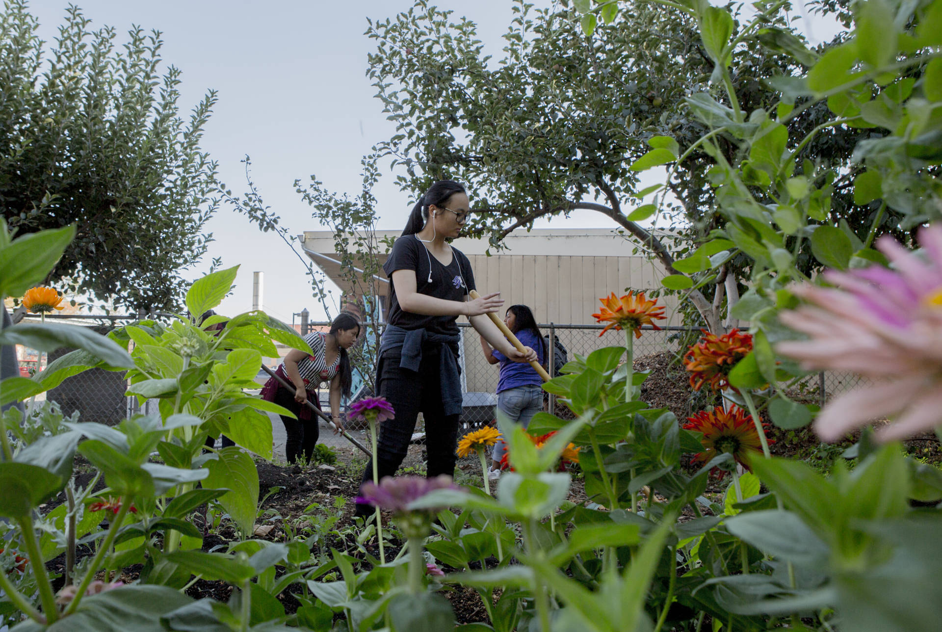 Love Cultivating Schoolyards participants tend the garden at Castlemont High School in Oakland.  Anne Wernikoff/KQED