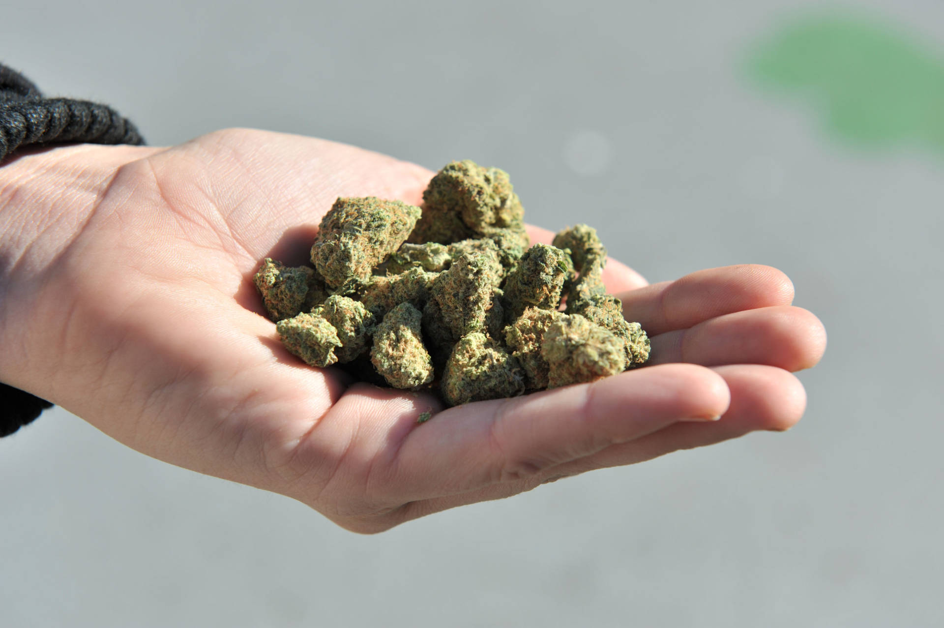 Three California agencies released proposed regulations Friday, Dec. 7, 2018, for the state's marijuana industry including deliveries that will become permanent next month after state lawyers finish their review of them. DON MACKINNON/AFP/Getty Images