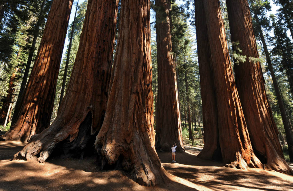 Sequoia, Kings Canyon Close Due to Health, Safety Concerns