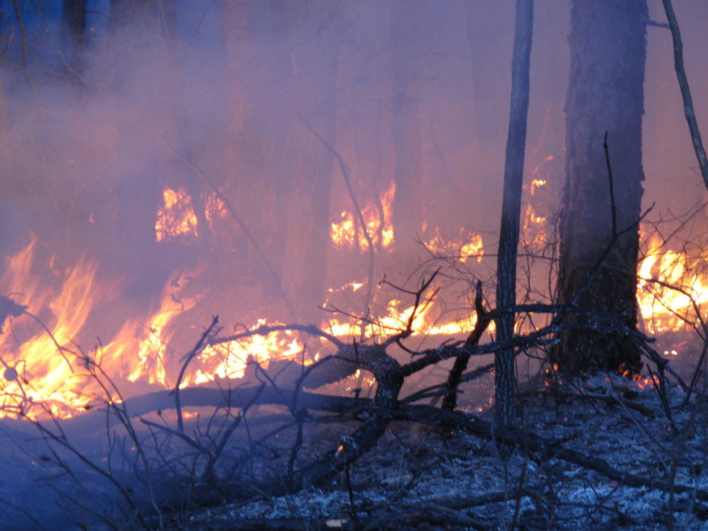 Shutdown Hampers Wildfire Preparedness and Training Across the Country