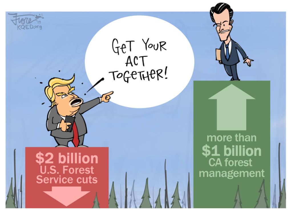 Trump Slams California's Forest Management . . . Again