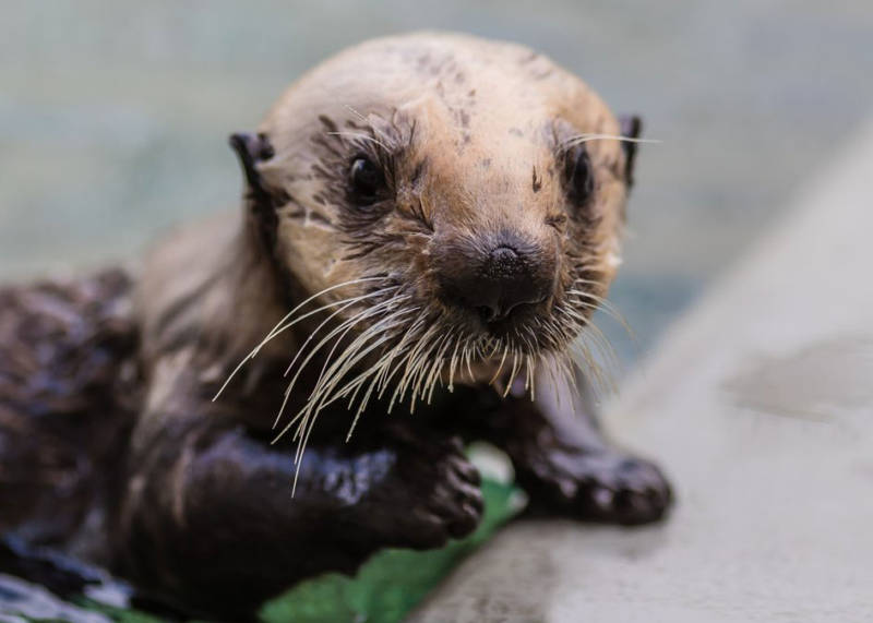 Langly was found on a beach in San Luis Obispo County in May of last year after her mother had been bitten by a shark.