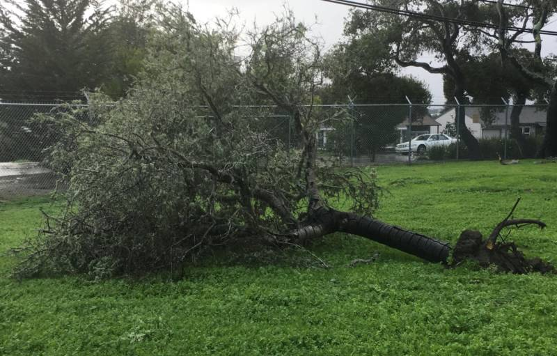 A downed tree behind the National Weather Service Forecast Office in Monterey.
