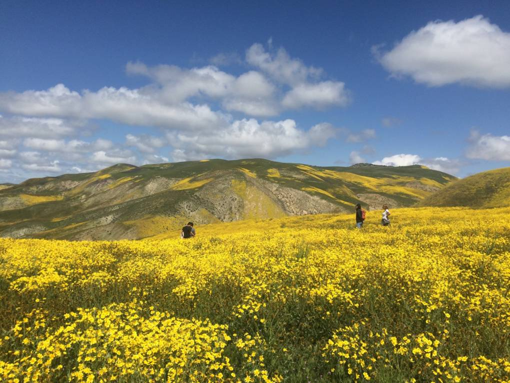 A Little More Rain Could Bring Another Wildflower 'Super Bloom' to California