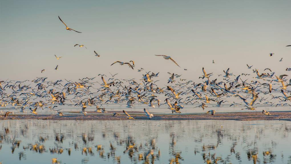 Massive Bird Die-Off at Salton Sea Raises Environmental Concerns