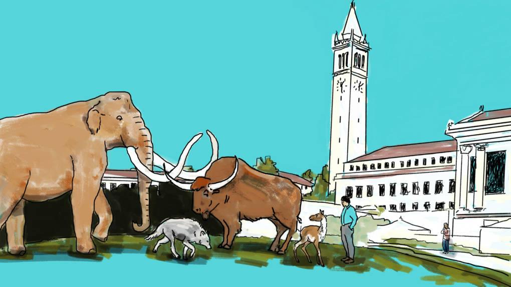 Are There Dinosaur Bones in UC Berkeley's Campanile?
