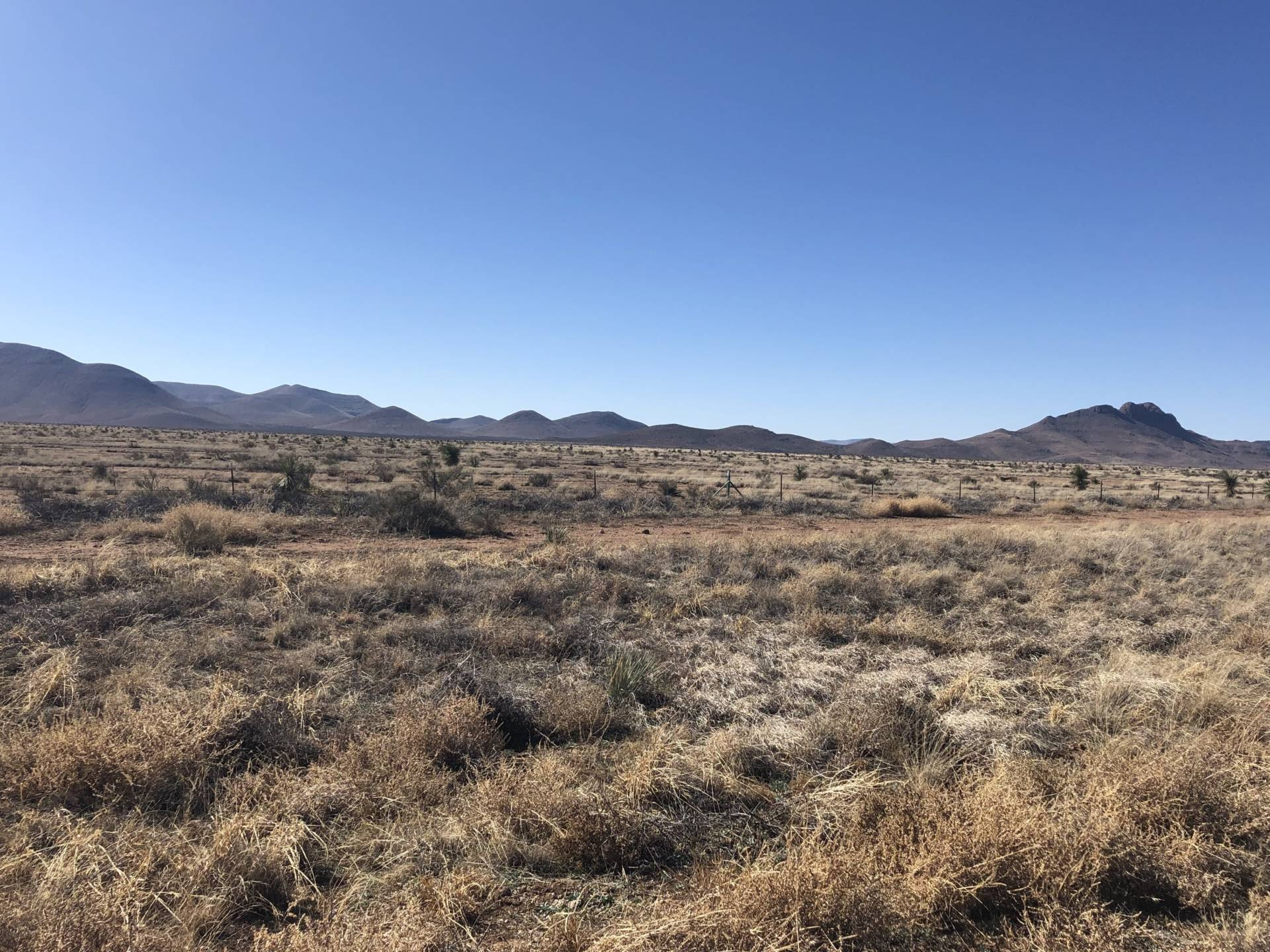 New Mexico's Bootheel region along the U.S.-Mexico border is an important wildlife corridor. There is currently no border wall in this area but environmentalists are concerned about what could happen if the wall is expanded. Mallory Falk/KRWG