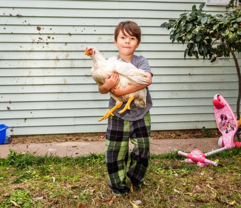Aden, 6, with one of the family's several rescued factory chickens in Atwater.