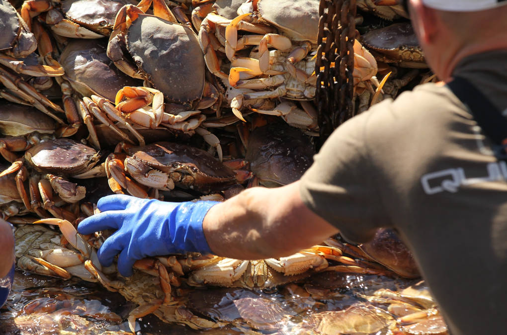 West Coast Crabbers Grapple With Climate Change