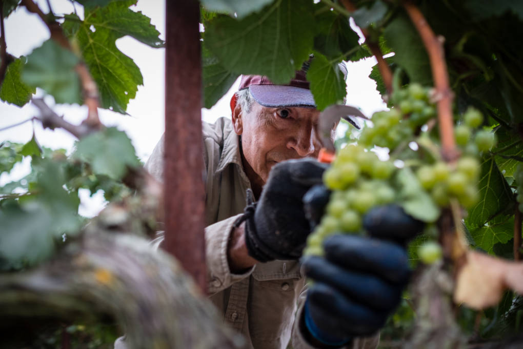 PBS Film Spotlights Mexican Americans' Role in Napa Valley's Winemaking