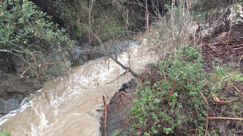 The San Francisquito Creek on the Stanford campus. Creeks like this were tempting to San Franciscans thirsty for San Mateo County's fresh water in the years after the Gold Rush.