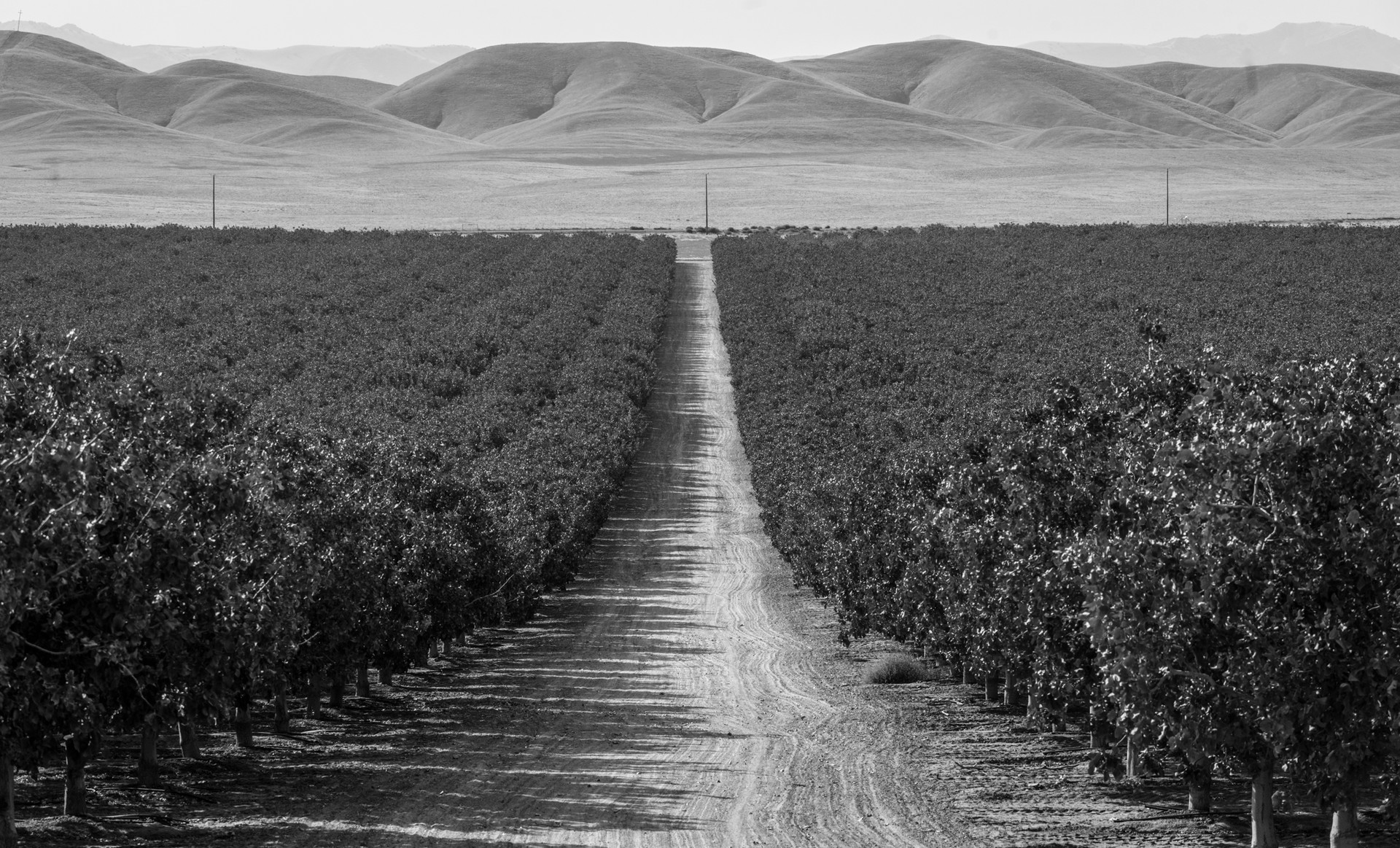 Mark Arax: Chasing the Water and Dust Behind the California Dream