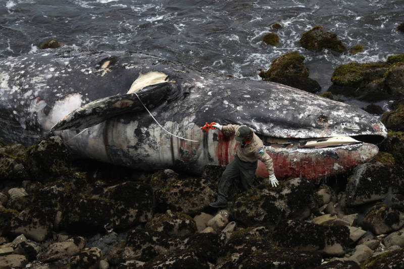Lightning Round: Dead Whales, Expensive Gas and 'Earthquake Weather