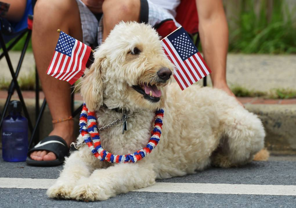 6 Tips From a Vet to Keep Your Pets Safe on July Fourth