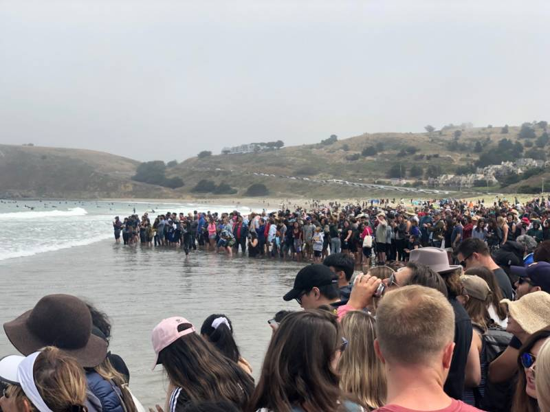 Thousands gather in Pacifica to take part in the annual World Dog Surfing Championships.