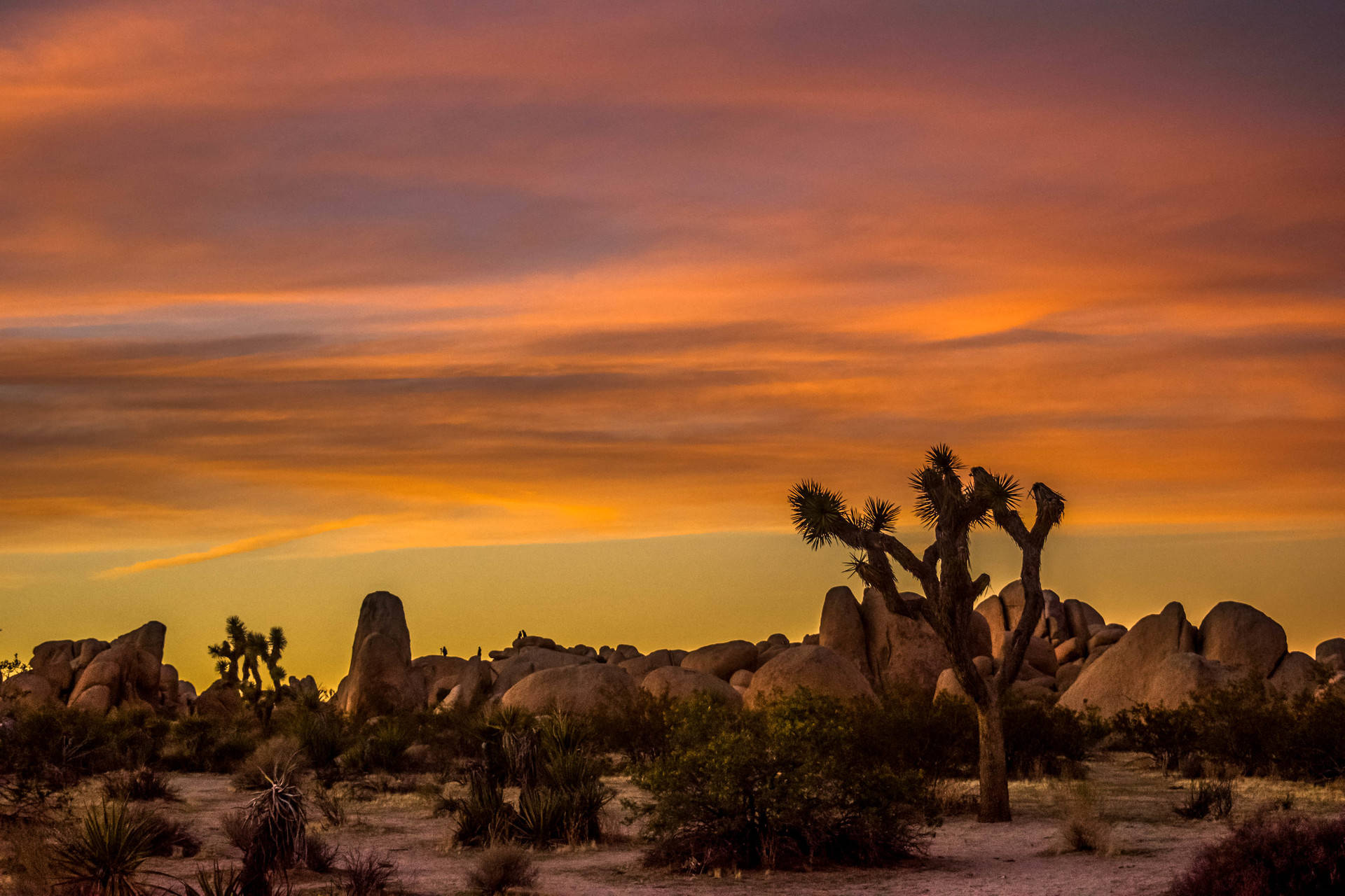 Joshua Tree National Park, free to enter (along with all the rest of them) this Sunday, Aug. 25. Ashley Urdang/KQED
