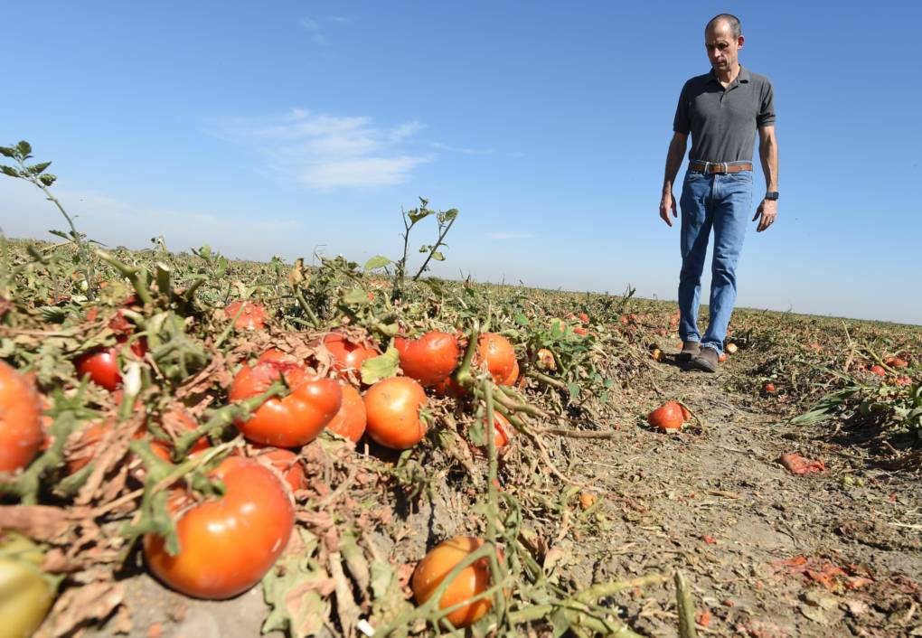 California Families Are Hungry While a Third of Crops Rot in Fields