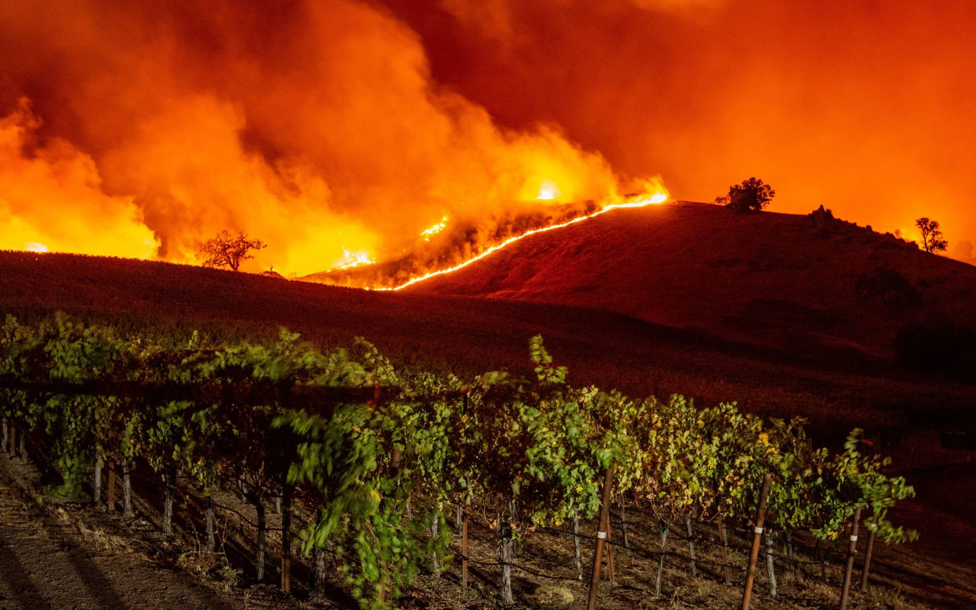 Flames approach rolling hills of grapevines during the Kincade Fire near Geyserville early Thursday.  Josh Edelson/AFP-Getty Images