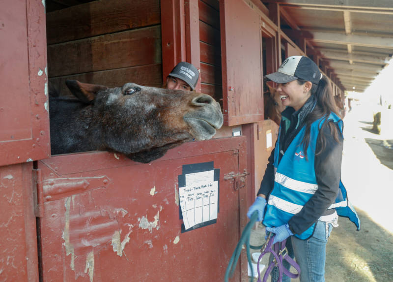 UC Davis veterinary students Grace Bloom (L) and Briana Hamamoto-Hardman (R) do a medical checkup on horse Bella who was evacuated from the Kincade Fire.
