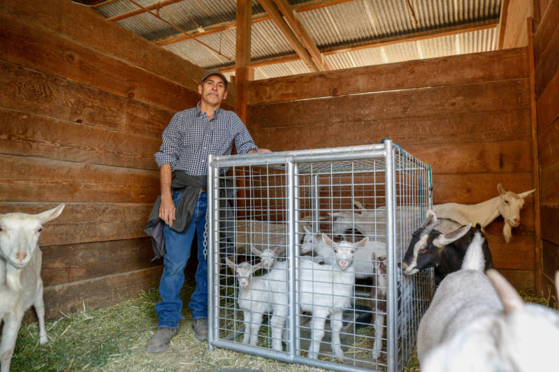 Livestock owner Moises Lopez had to evacuate his goats to the Sonoma County Fairgrounds on Oct. 27, 2019, to escape the encroaching Kincade Fire.