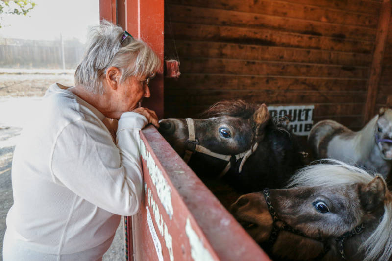 Yonder Hills Farm owner Kathy Jorgenson checks on her horses at the Sonoma County Fairgrounds evacuation shelter on Oct. 29, 2019.