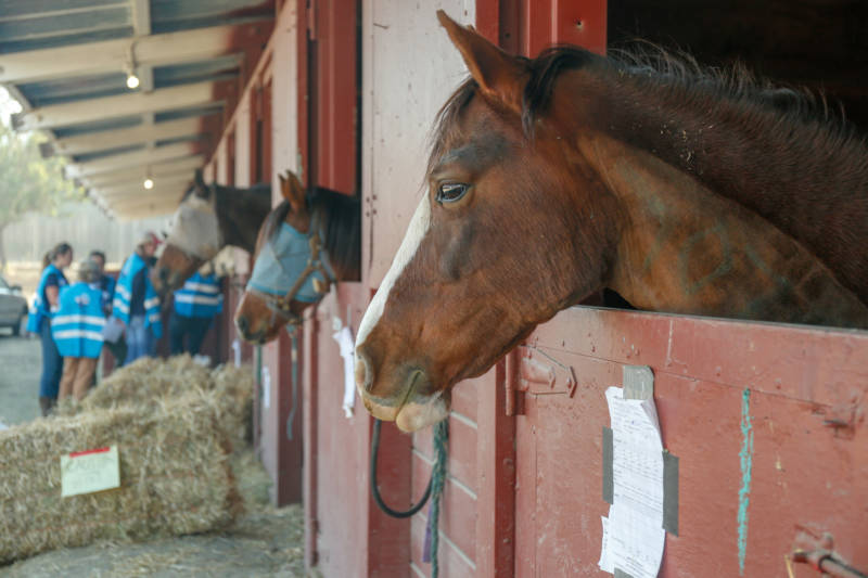 Yonder Hills Farm owner Kathy Jorgenson's barn burned down in the Kincade Fire. Nineteen of her horses were evacuated to Sonoma County Fairgrounds on Oct. 27, 2019.