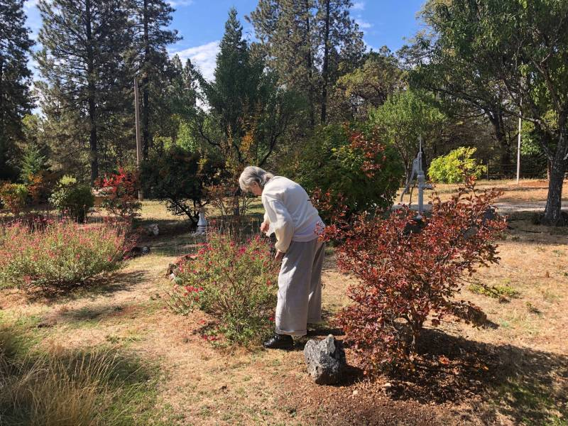 Emma Titus waters bushes in her front yard in Grass Valley. She said she spent $3,000 on clearing her land to make her property more fireproof.
