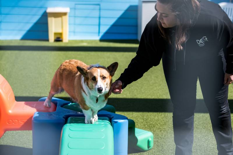 Lindsey Parker in the play area at the Dog Social Club in Oakland on Mar. 25, 2020.