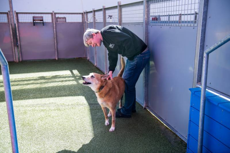 Katie Wojnoonski pets Banger, a dog boarding at the Dog Social Club, on Mar. 25, 2020. Banger's owner is a firefighter.