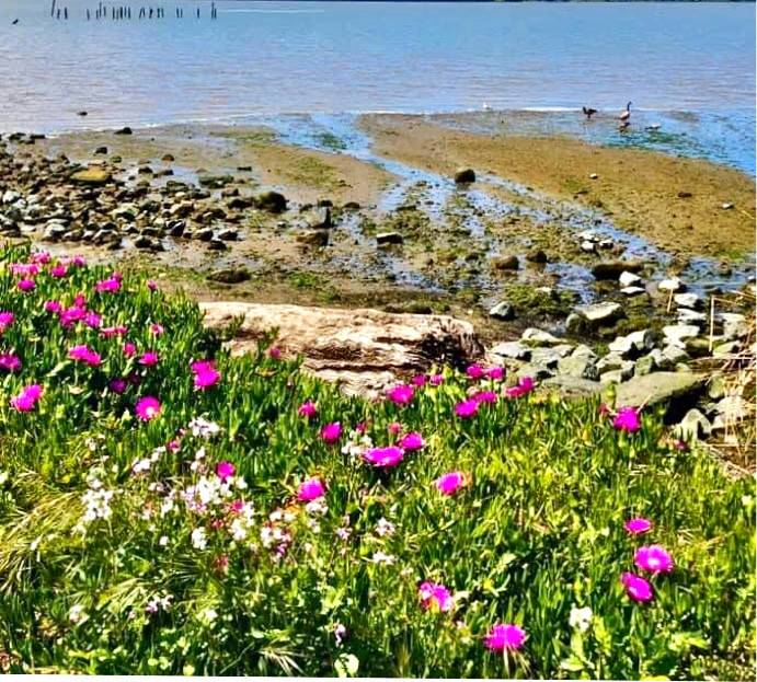 A photo Moghaddam snapped on a recent stroll near her home in Benicia.
