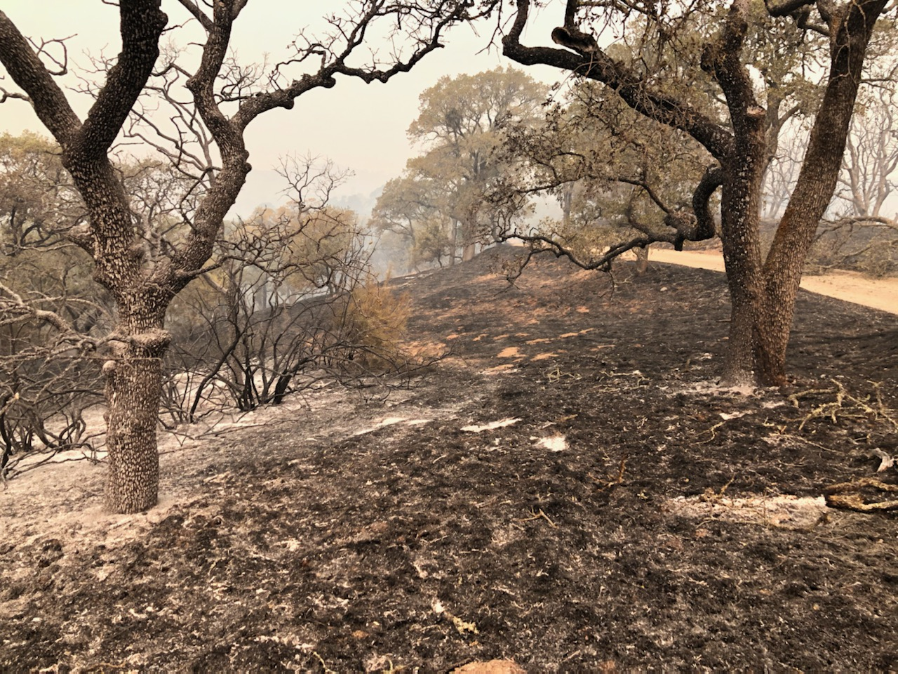 Part of Henry W. Coe State Park burned by the SCU Lightning Complex fires of 2020