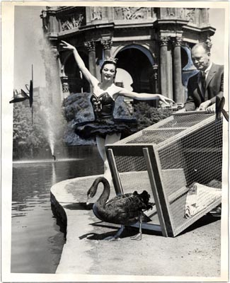A ballerina poses as a black swan is released into the lagoon at the San Francisco Palace of Fine Arts in 1937.