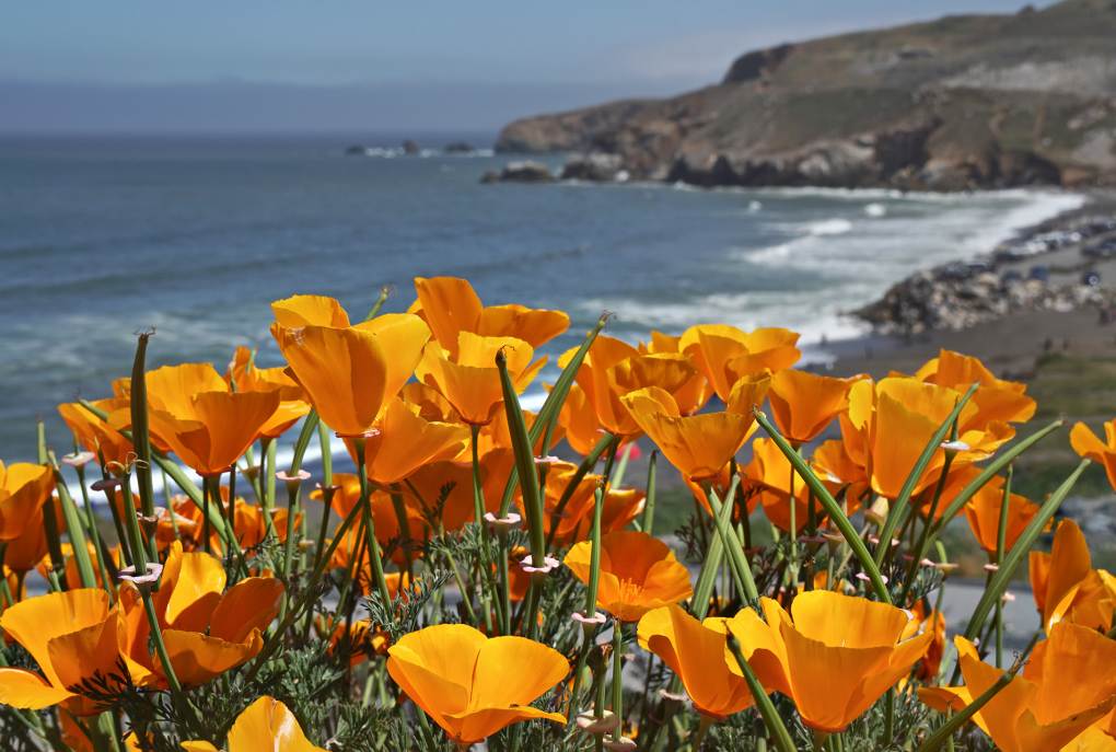 The shoreline at Pacifica, which is closing its beaches this Labor Day weekend Alan Grinberg via Flickr