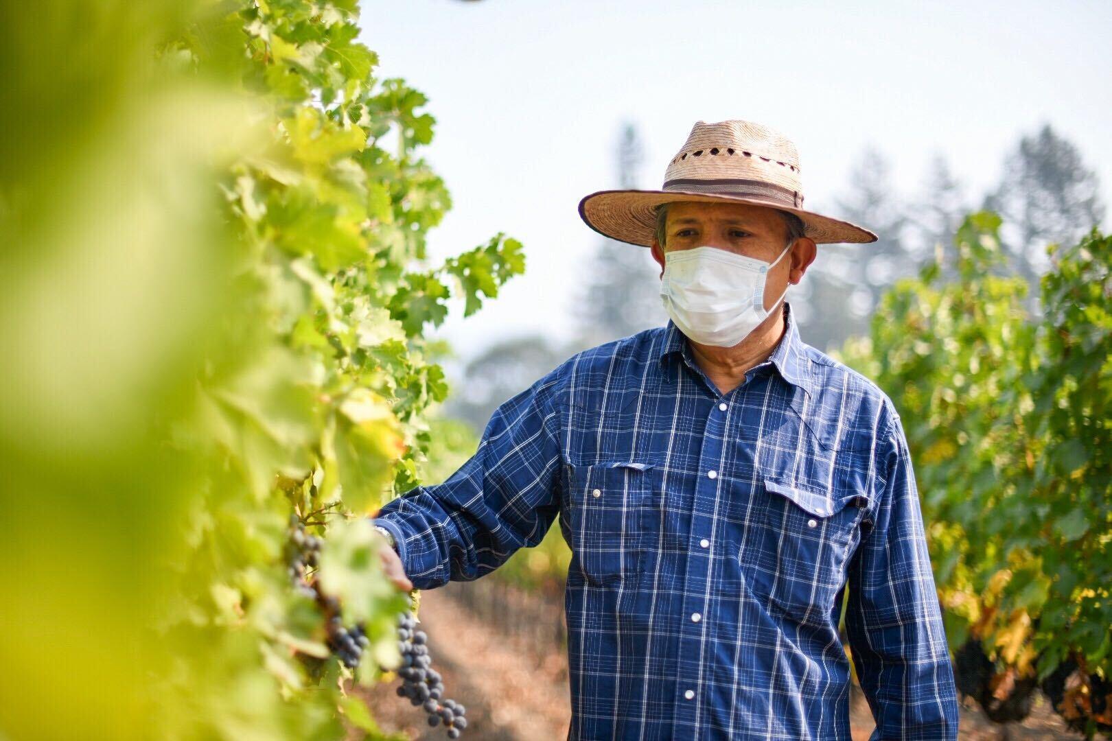 Enrique Lopez, of Servin-Lopez Vineyard Management, at Garton Vineyards in Napa on Sept. 30.