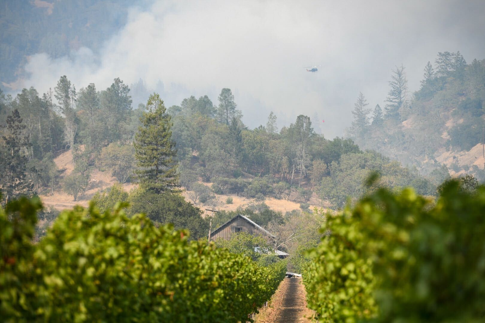 The Glass Fire burns behind a vineyard on Highway 29 north of Calistoga on Sept. 30.