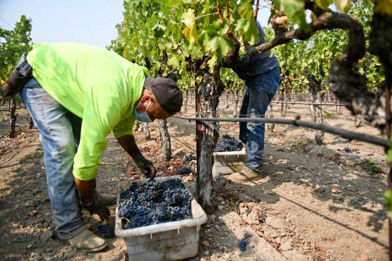 Wine Country Fires Yet Another Blow to Farmworkers Reeling From COVID-19