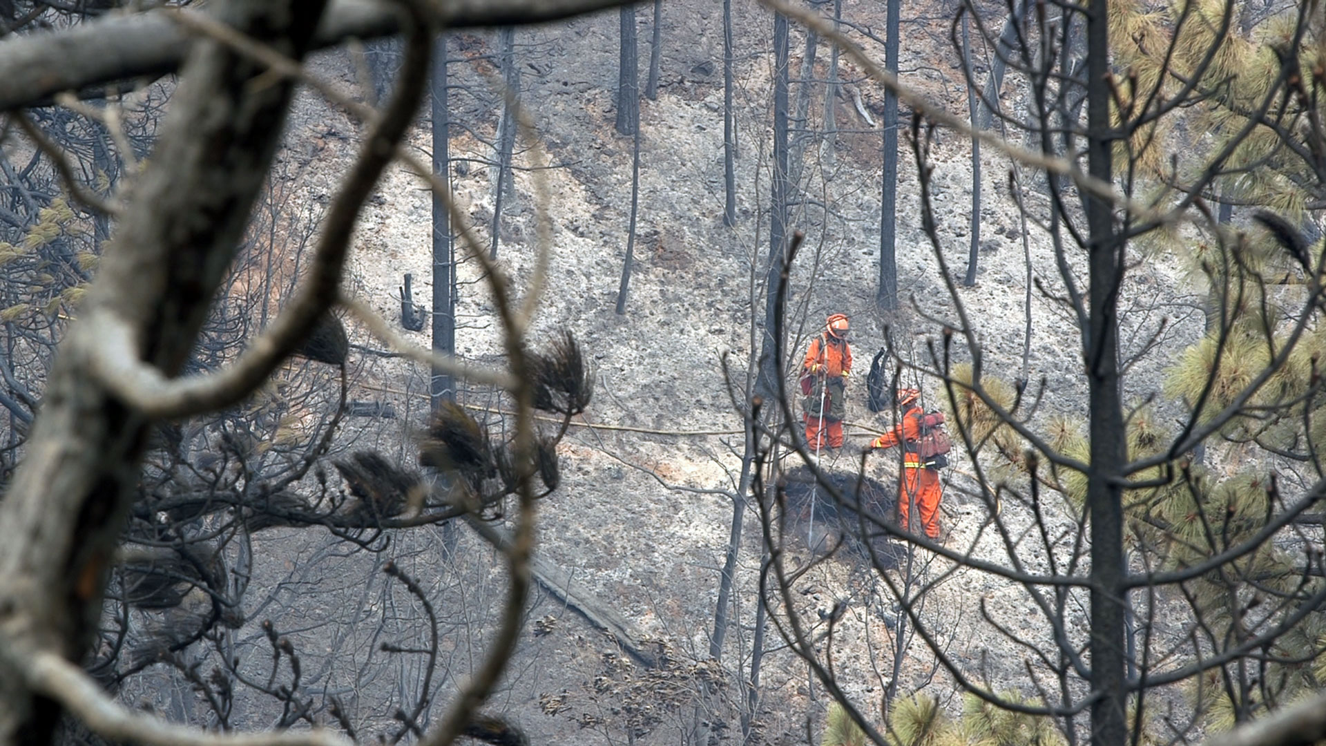 Inmate firefighters seen from a distance, working on the Bully fire.