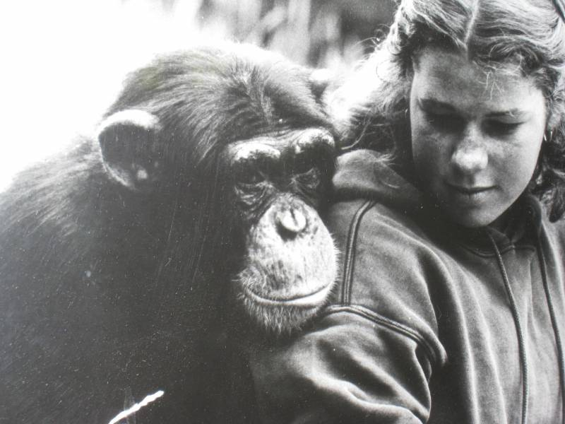In 1980, Penny Nelson studied chimpanzees like Charlie here, as she pursued a a career in primatology. The KQED host and reporter died on March 18, 2021.