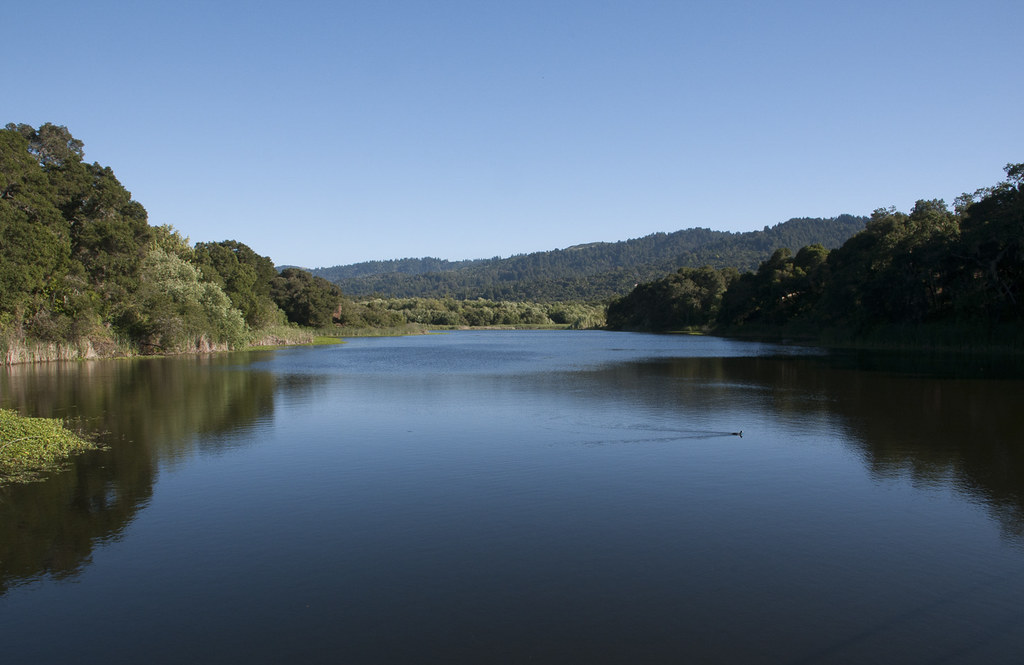 Searsville Dam may be man-made, but it's still pretty and fascinating to natural scientists. The dam is surrounded by grasslands, chaparral, oak woodland, mixed evergreen forest, and even freshwater wetlands.